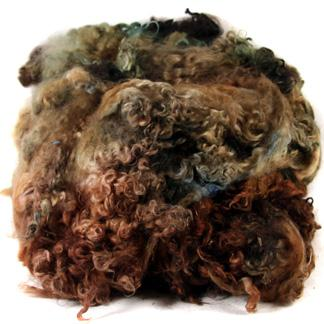 Wensleydale dyed fleece - rich browns